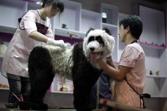 Los perros que querían ser tigres y osos panda