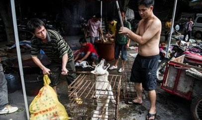 A dog howls at its fate at a slaughterhouse in Yulin. Photo: Li Hao for the Global Times